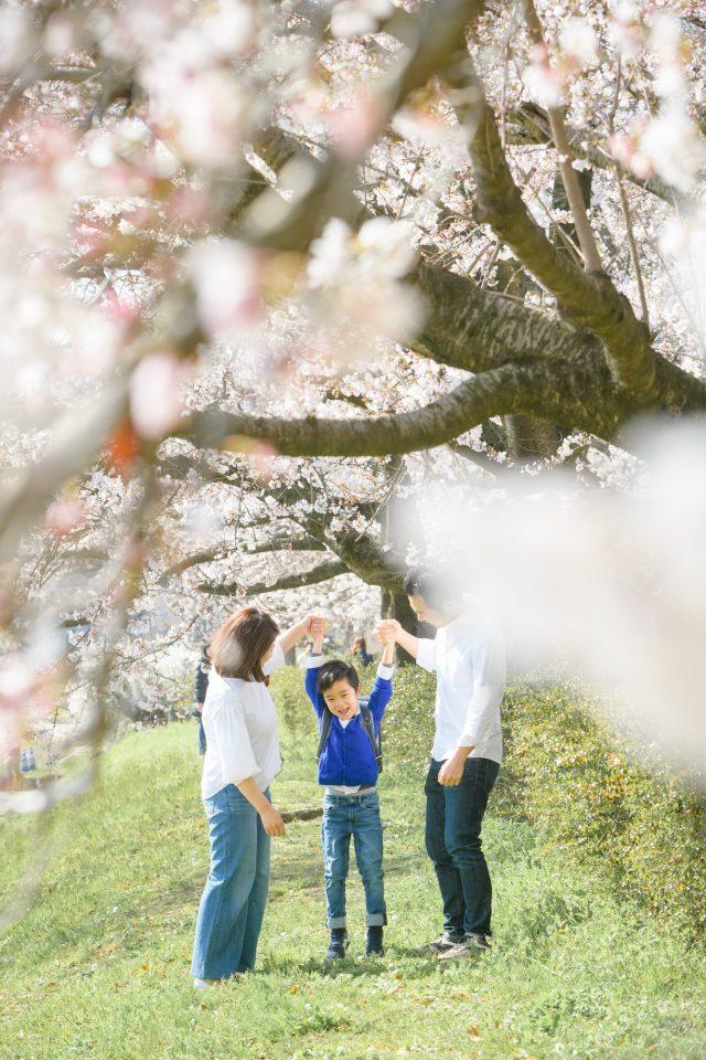 お客様の声をいただいた写真の一例(桜並木の下で手をつなぐ親子3人)